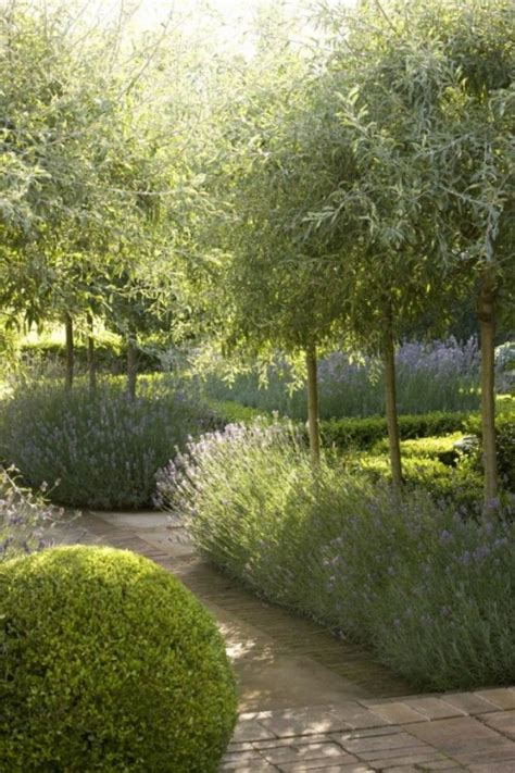 beautiful garden designs  olive trees gardenoholic