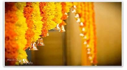 Flower Indian Marigold Perfect Flowers Haldi Ceremony