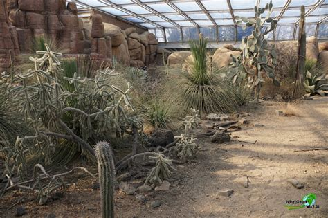 foto galerie  burgers zoo freizeitpark weltde