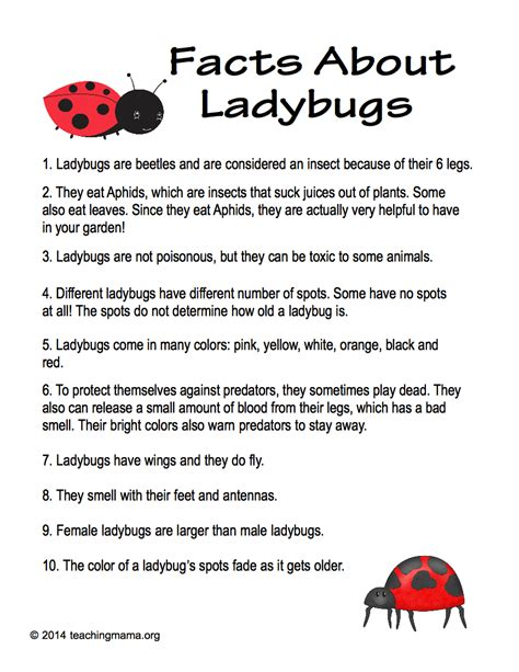 facts about ladybugs teaching 651 | Facts About Ladybugs