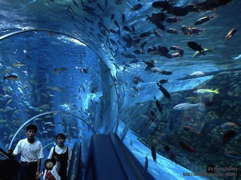 fond d 233 cran aquarium gratuit fonds 233 cran aquarium poissons