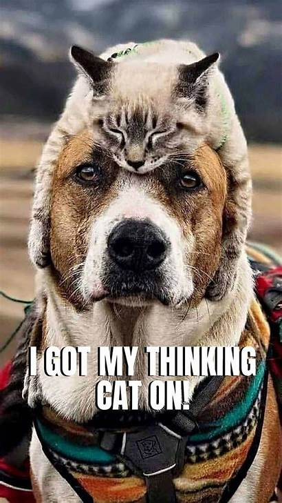 Dog Animal Funny Wallpapers Phone Memes Background