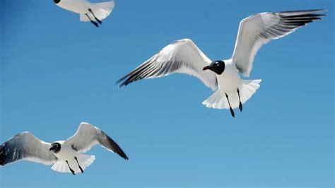 top 28 how far do birds fly in a day birds of prey day