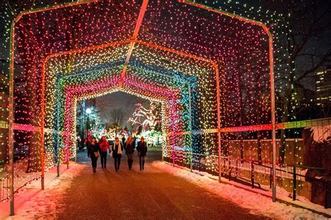 zoolights   winter lights display  chicago