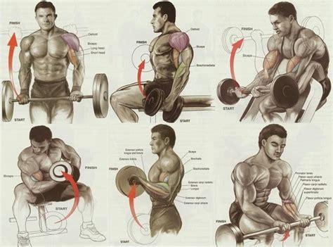 exercises  biceps workout wwwbodybuildingcom