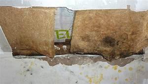 Feuchte Decke Was Tun : schimmel von tapete entfernen schimmel entfernen unsere experten tpps zur schimmel schimmel ~ Markanthonyermac.com Haus und Dekorationen