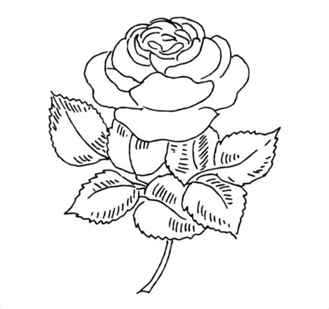 flower coloring pages psd ai vector eps