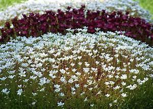 Kuebelpflanzen Winterhart Bluehend : bildergebnis f r bodendecker bl hend winterhart halbschatten gartenbepflanzung pinterest ~ Whattoseeinmadrid.com Haus und Dekorationen
