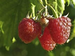 Gartenarbeit Im August : pflanzen blumen ratgeber tipps haus ~ Lizthompson.info Haus und Dekorationen