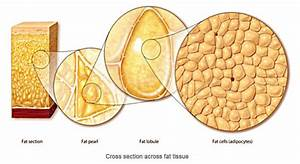 One Pound Of Fat Versus One Pound Of Muscle  Clearing Up