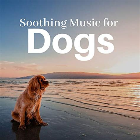 calm anxious dogs relaxing sounds  dogs