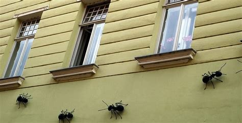 ants   house  extermination tips   ants