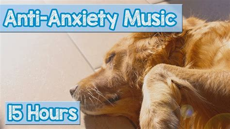 calming   puppies  anxiety soothing lullab