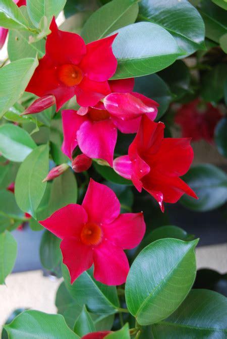 Schöne Kübelpflanzen Für Die Terrasse by 187 K 252 Belpflanzen F 252 R Die Terrasse Gartengestaltung