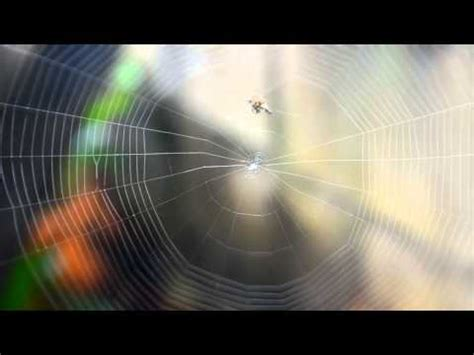 Spider Building Web - Time Lapse - YouTube
