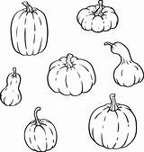 Gourds Outline Different Pumpkins Gourd Types Shapes Vector Clip Collection Pumpkin Isolated Sizes Illustrations Squash Vegetable sketch template