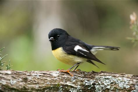 Small Birds Have Vision Twice As Fast As Humans Study