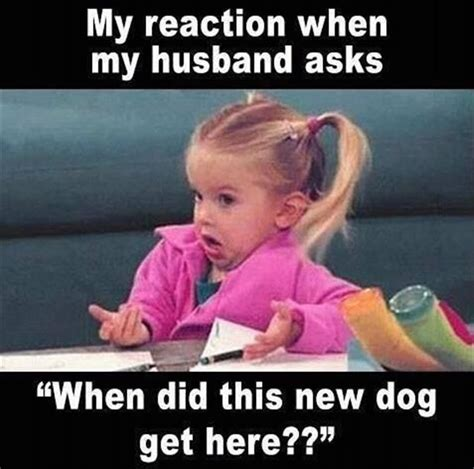 Wife Husband Meme - canine rehabilitation and conditioning group 187 blog archive 187 friday funny 8 15 14
