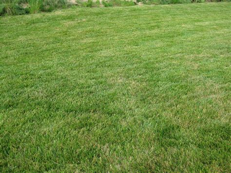 fescue sod fescue sod 28 images 301 moved permanently confederate fescue blend grass sod from dmg