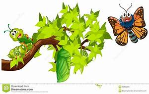 Life Cycle Of Monarch Butterfly Stock Vector