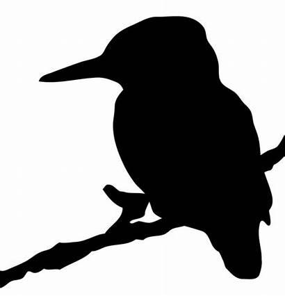 Silhouette Kingfisher Clipart Bird Birds Outline Publicdomainpictures