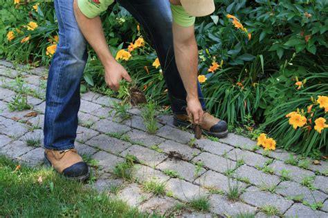 how to remove weeds from your paving stones and install