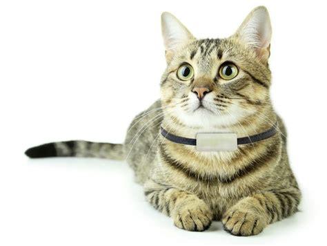 giv katten egen mobil med sporing recorderedk