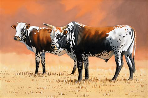 Frames For Artwork On Canvas by Rupert Hanley Nguni Cattle 900 X 610 Sold The