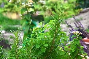 Garten Im September : garten im september aufgaben f r garten und balkon ~ Watch28wear.com Haus und Dekorationen
