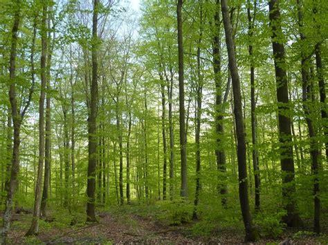 parcs et for 234 ts environnement d 233 couvrir mairie de