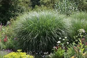 Gräser Für Den Garten : der richtige standort f r ziergr ser im garten native plants gartenblog ~ Sanjose-hotels-ca.com Haus und Dekorationen