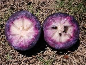 Purple Star Apple Fruit