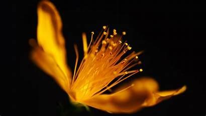 Flower Golden Desktop Laptop 4k Wallpapers Pc