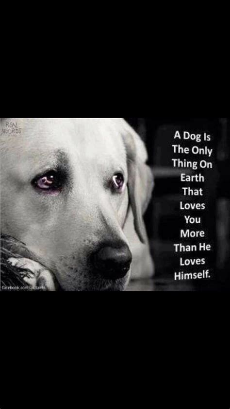 dog quote wall art  rescue fundraising images