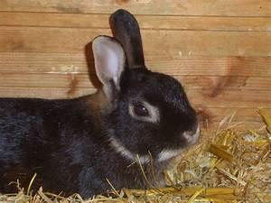 Kaninchenkäfig Für 2 Kaninchen : die sch lerzeitung der kks ikrams kaninchen ~ Frokenaadalensverden.com Haus und Dekorationen
