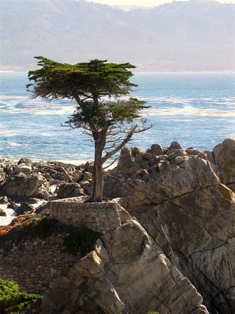 Yes, the driving distance between san francisco to pebble beach is 118 miles. The Lone Cypress on 17 mile drive, Pebble Beach California ...