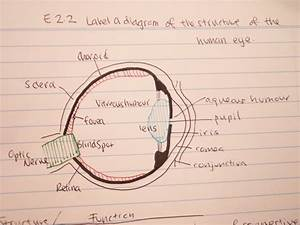 Tiffany U0026 39 S Biology Blog  E 2 2 Label A Diagram Of The Structure Of The Human Eye