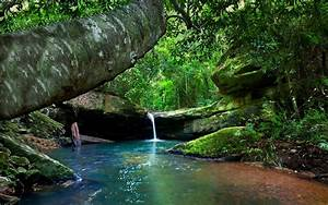 Rainforest, River, Turquoise, Water, Green, Moss, Rocks, Tree, Bushes, Landscape, Nature, Australia