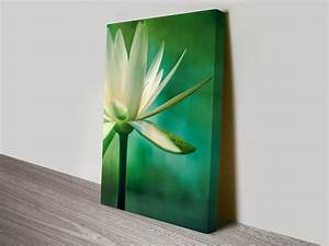Lotus Flower Artwork on Canvas Prints Australia