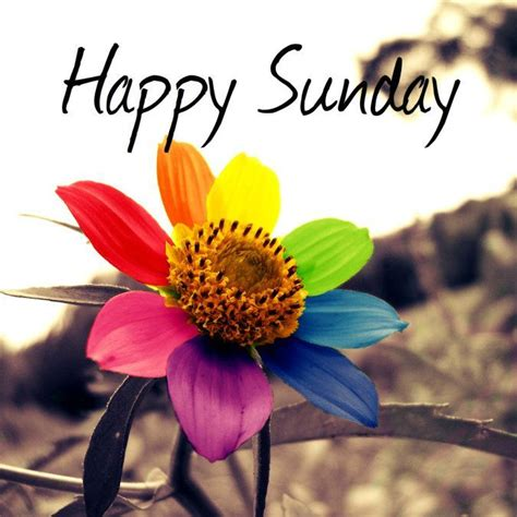 Happy Images Happy Sunday Colorful Flower Pictures Photos And Images