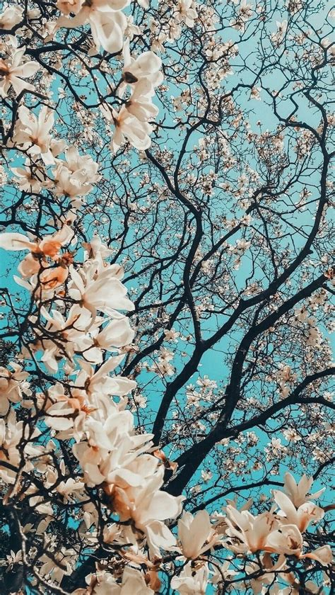Beautiful Tree Phone Wallpaper by 1001 Wallpaper Images For Your Phone And Desktop