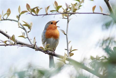 Best Bird Watching Destinations In Europe  Europe's Best