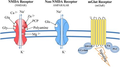 Full Form Of Nmda by Frontiers Researching Glutamate Induced Cytotoxicity