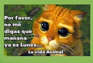 Imágenes de risa con animales: Chistes de mascotas para descargar Animales Hoy