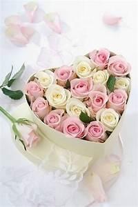 Bouquet De Mariage : bouquet de roses rose images ~ Preciouscoupons.com Idées de Décoration