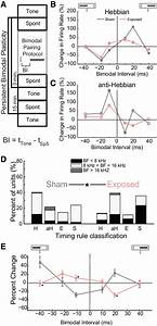 Bimodal Plasticity Timing Rules Are Significantly