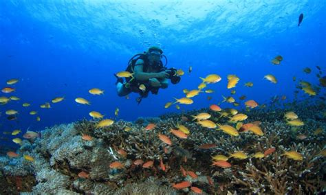 scuba diving  bali indonesia dive  world vacations