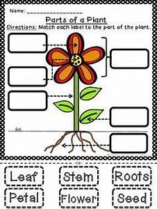 Great Way To Test Students If They Know Their Basic Plant