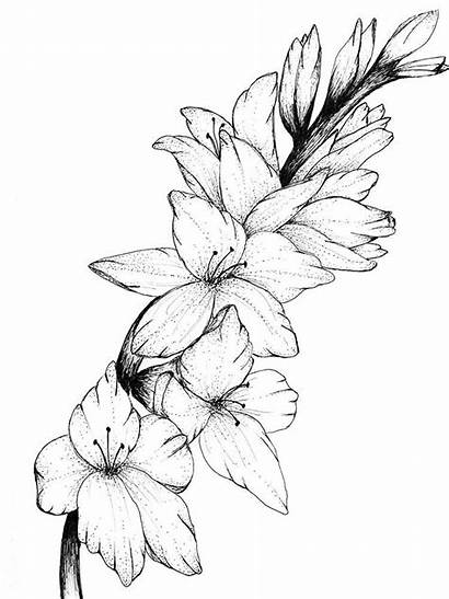 Tattoo Drawing Gladiolus Flower Birth Flowers Tattoos