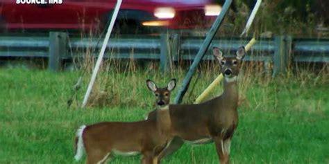 Dept. Of Health Warns Against Eating Deer Meat In Counties